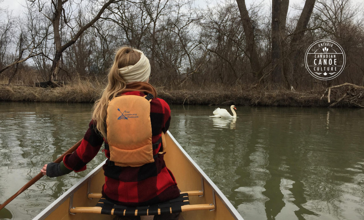 photo2-swan