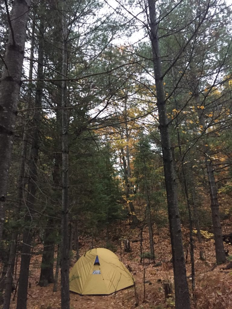 snugly tucked away deep in the forest